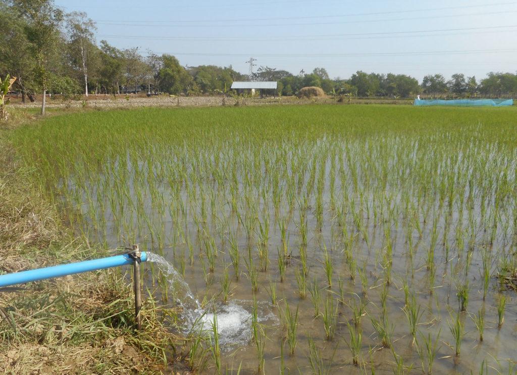 井戸水を水田に利用している風景